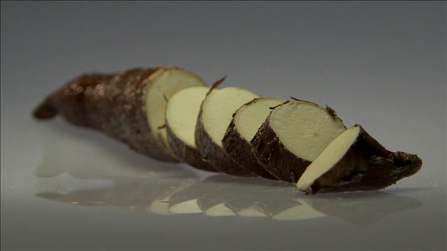 À la découverte du manioc