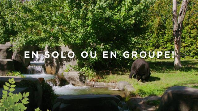 Capsules Vie de zoo