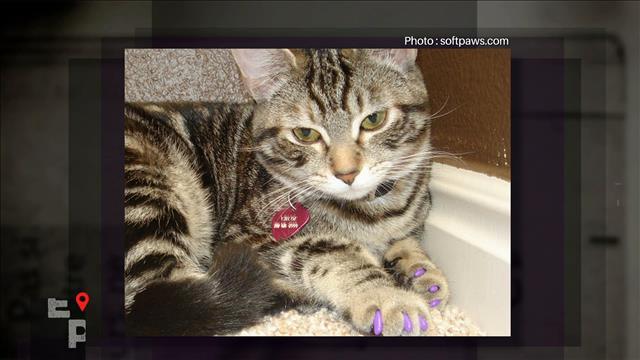 Règlement sur l'interdiction de dégriffer les chats