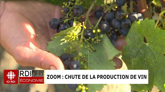 ZOOM : chute de la production de vin