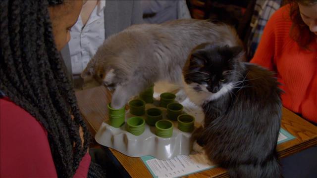 Vetpop : Sébastien explique comment déterminer si un chat est gaucher ou droitier.