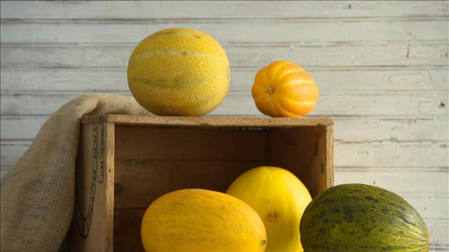 Les melons en vedette