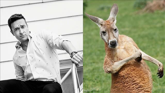Le kangourou roux, l'animal miroir de Mario Tessier
