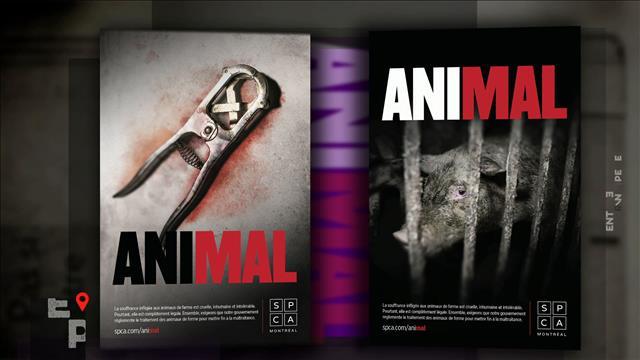 Le traitement des animaux de ferme