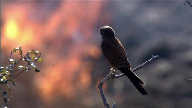 Oiseaux et incendie