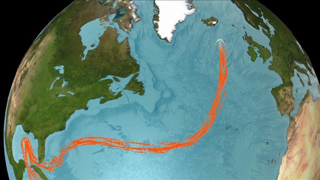 Chronique : Gulf Stream