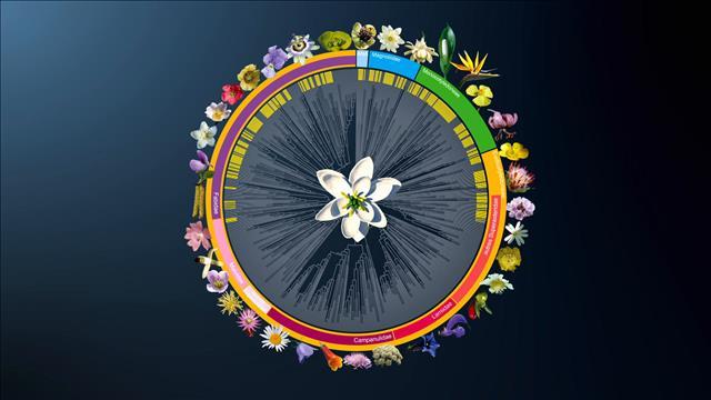 Flash-science : Premières fleurs