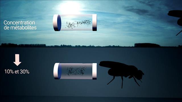 Des mouches sous terre
