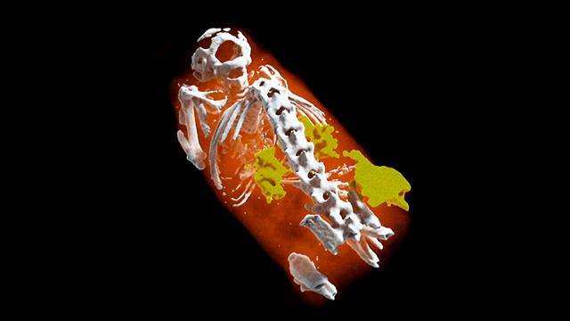 Flash-science Radiographie 3D en couleurs