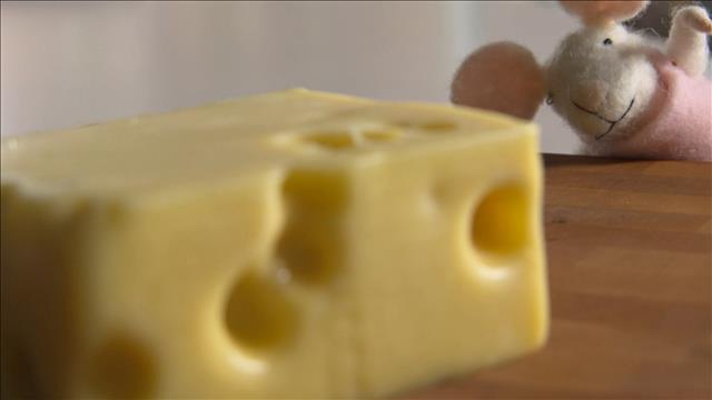 Un test de goût de fromages emmental