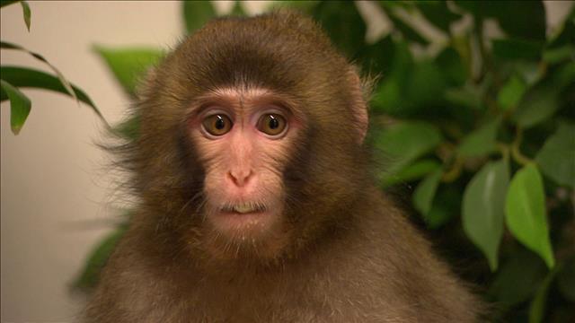 Guylaine Tremblay et le bébé macaque