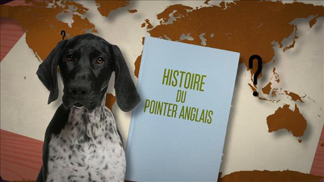 Le pointer anglais