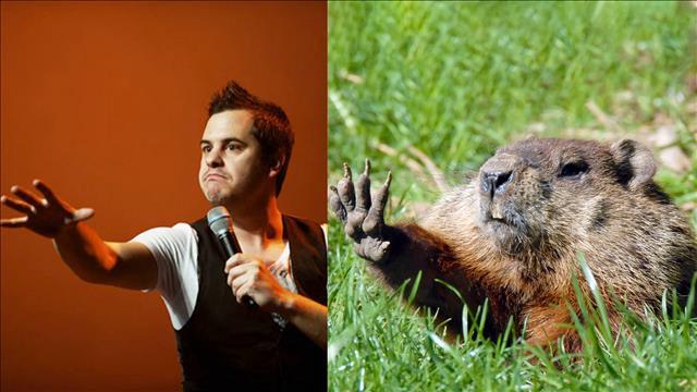 L'animal miroir de Pierre Hébert est la marmotte commune
