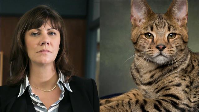 L'animal miroir de Geneviève Brouillette est le chat Savannah