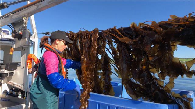 À la découverte des condiments d'algues gaspésiennes