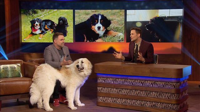 Stéphane Bellavance et son chien