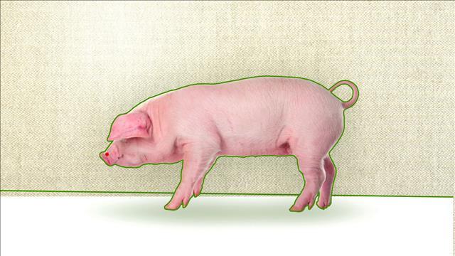 Capsule chiffrée #42 - La production de porc