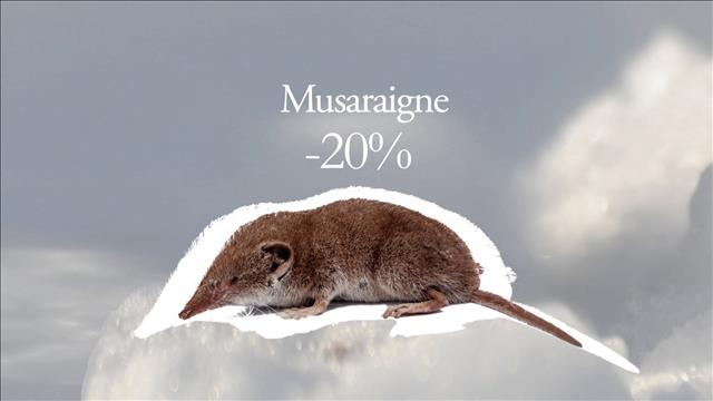 Flash-science : Musaraigne