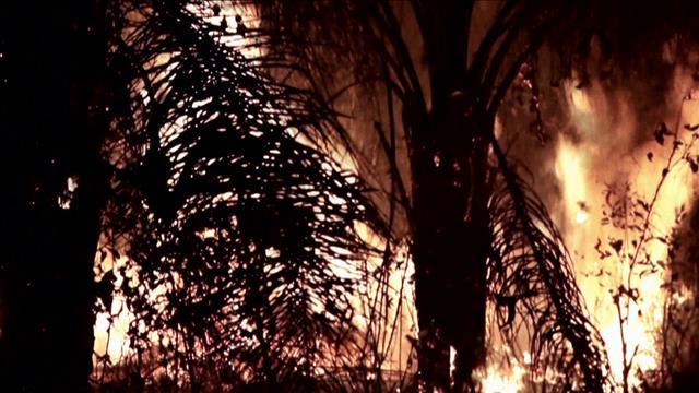 Chronique: feux Amazonie