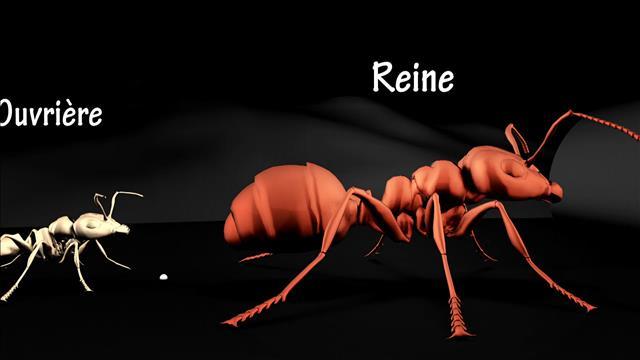 Destin de fourmis