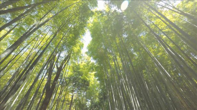 Chronique : arbres et CO2