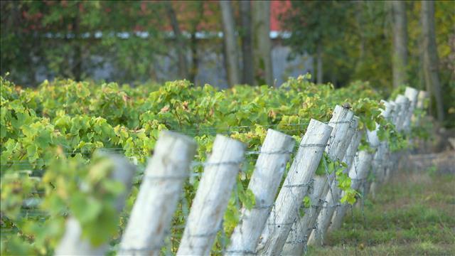 Les vins rouges du Québec
