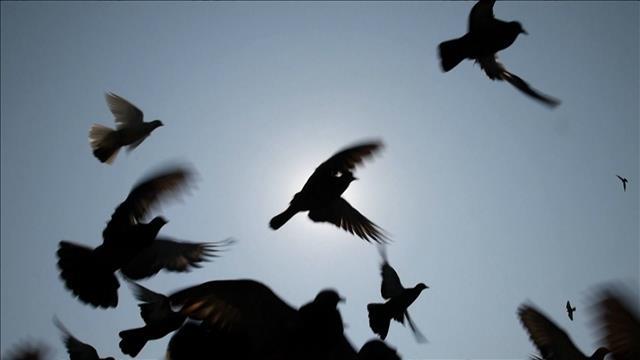 Chronique : Oiseaux