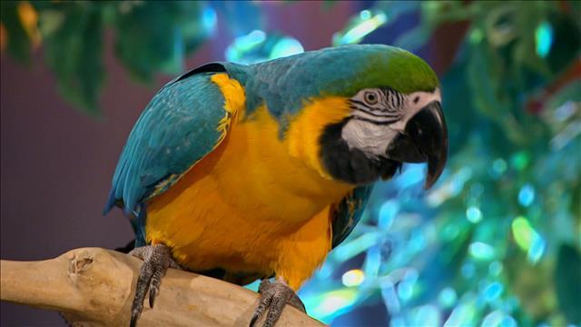 Catherine Proulx-Lemay et le perroquet ara Fidji