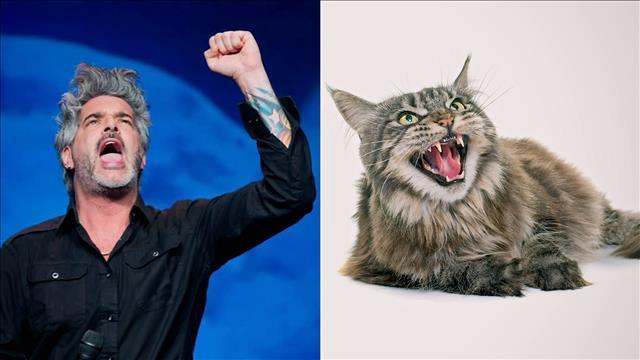 L'animal miroir de Réal Béland est le chat Maine Coon