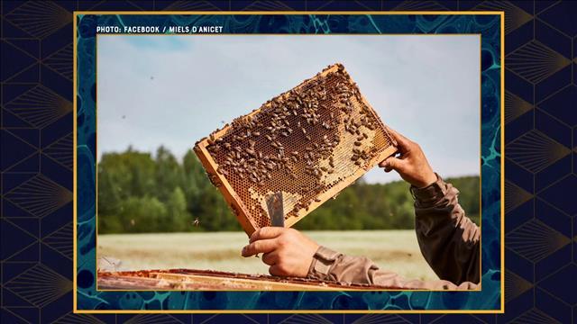 Anicet Desrochers - le roi des abeilles reines!