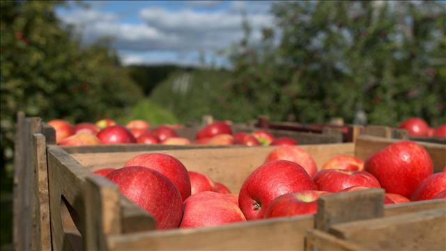 Des pommes…aux pesticides