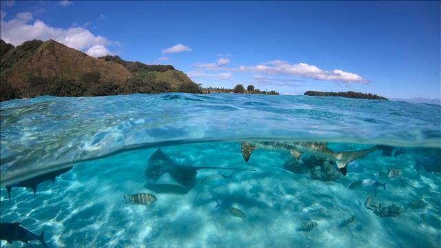 État de santé des océans : peut-on renverser la vapeur?