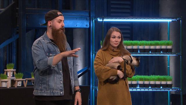 Les entrepreneurs proposent de l'herbe à chat 100 % Québec.