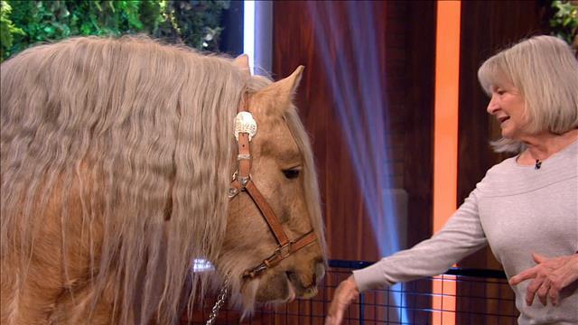 Le cheval Gypsy