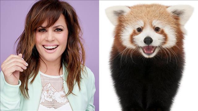 L'animal miroir de Patricia Paquin est le panda roux