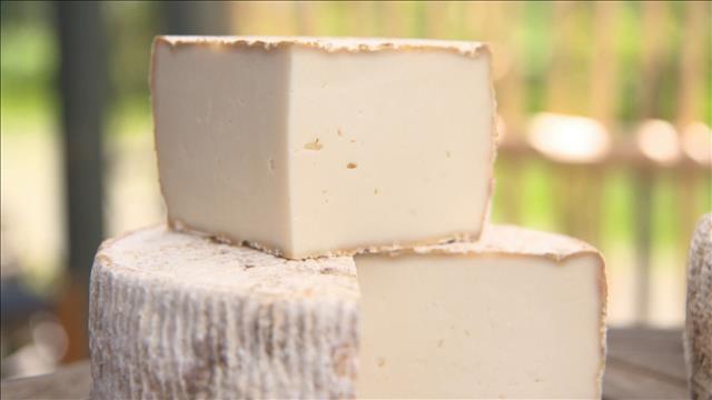 Des fromages tommes d'ici