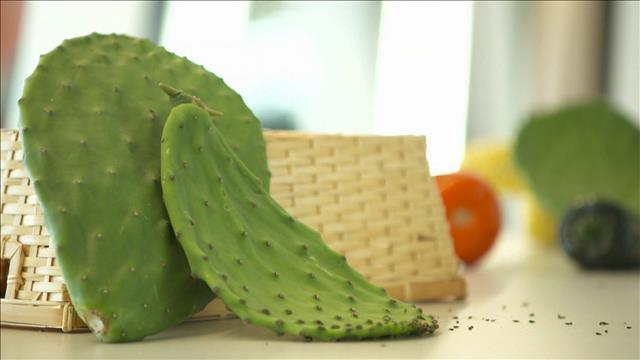 À la découverte du cactus nopal
