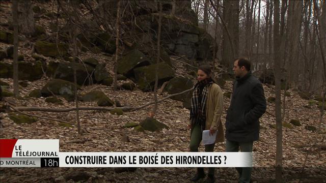 Construire dans le boisé des Hirondelles?