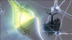 Une découverte prometteuse pour les schizophrènes