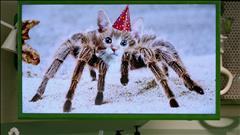 Comment traiter une morsure d'araignée-chat