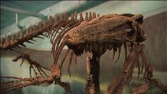 Dévoilement d'un fossile de 70 millions d'années à Morden