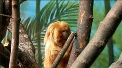 Petits et gros au zoo