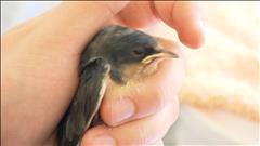 Un refuge pour animaux sauvages en Colombie-Britannique
