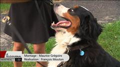 Augmentation des chiens enregistrés à Montréal
