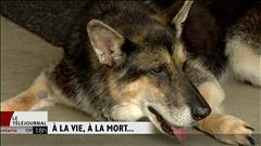 Un Ontarien veut prolonger la vie de sa chienne en la clonant