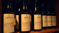 Sur la route des vins brésiliens