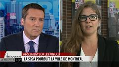 La SPCA poursuit la Ville de Montréal