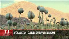 Afghanistan : culture du pavot en hausse