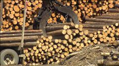 Les enjeux canadiens du conflit du bois d'oeuvre