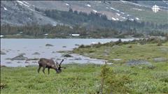 Des centaines d'espèces en déclin au Canada